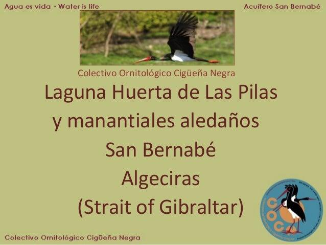Colectivo Ornitológico Cigüeña Negra  Laguna Huerta de Las Pilas y manantiales aledaños San Bernabé Algeciras (Strait of G...