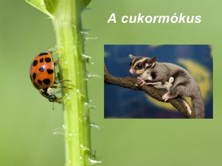 A cukormókusFree Powerpoint Templates                            Page 1