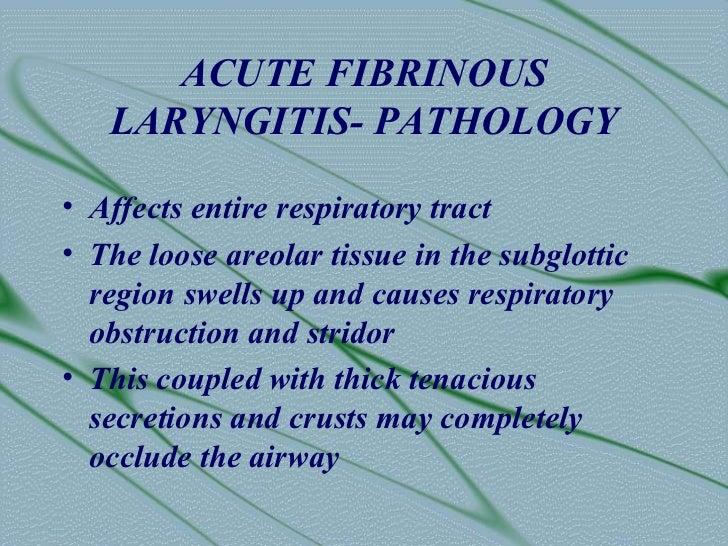 ACUTE FIBRINOUS   LARYNGITIS- PATHOLOGY• Affects entire respiratory tract• The loose areolar tissue in the subglottic  reg...