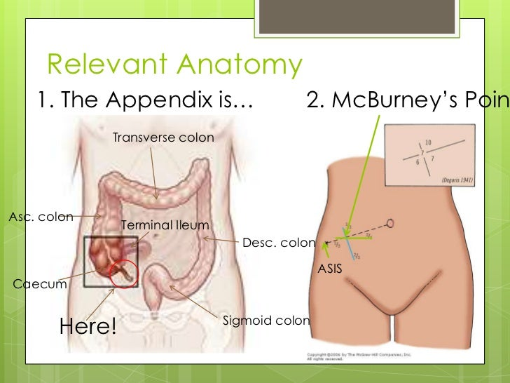 "Relevant Anatomy    1. The Appendix is…                     2. McBurney""s Poin             Transverse colonAsc. colon     ..."