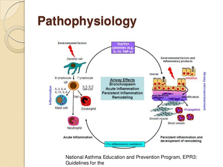 Acute asthma in... Eosinophils Symptoms