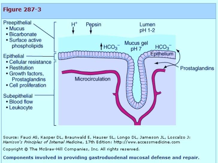 acute gastritis by dr. evelyn mbugua, Skeleton