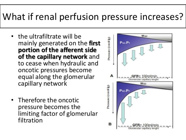 What would happen to the glomerular capillary pressure and filtration rate?