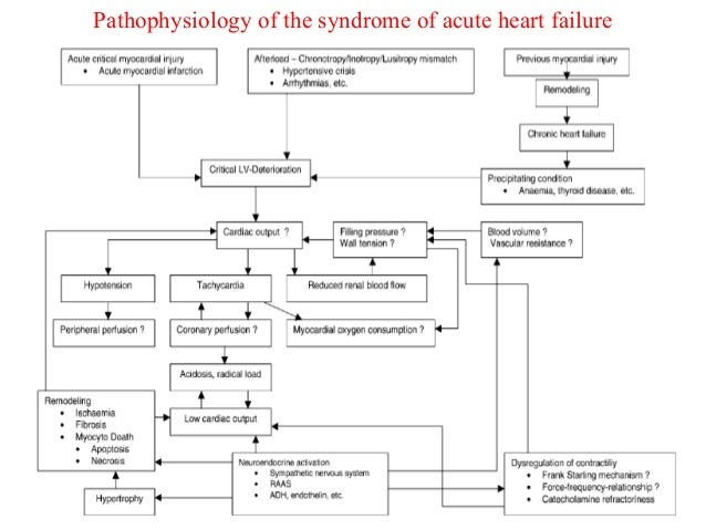 Pathophysiology of the syndrome of acute heart failure