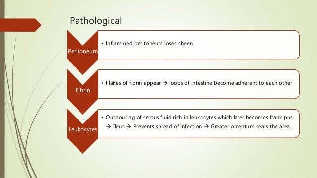 Pathological Peritoneum • Inflammed peritoneum loses sheen Fibrin • Flakes of fibrin appear  loops of intestine become ad...