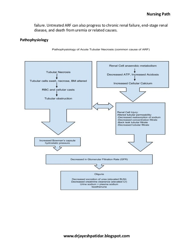 Renal Failure Concept Map.Acute Renal Failure Nursing Care Plan Amp Management