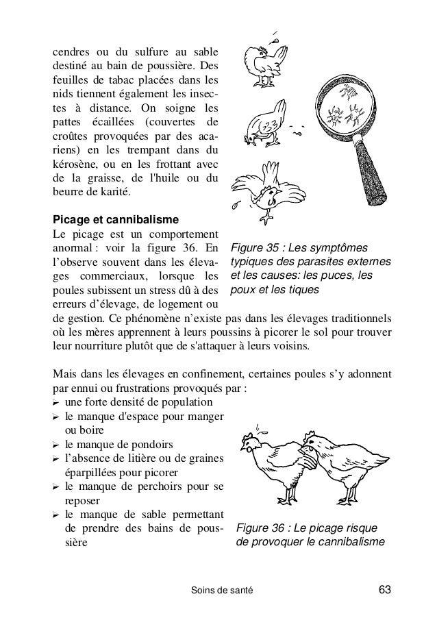 Marre des parasites dans votre poulailler for Traitement pour les poules
