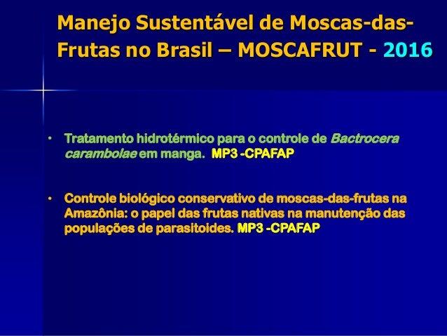 • Tratamento hidrotérmico para o controle de Bactrocera carambolae em manga. MP3 -CPAFAP • Controle biológico conservativo...