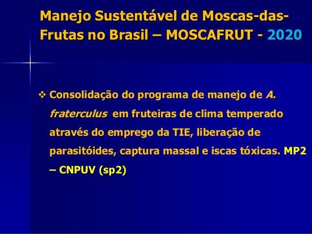  Consolidação do programa de manejo de A. fraterculus em fruteiras de clima temperado através do emprego da TIE, liberaçã...