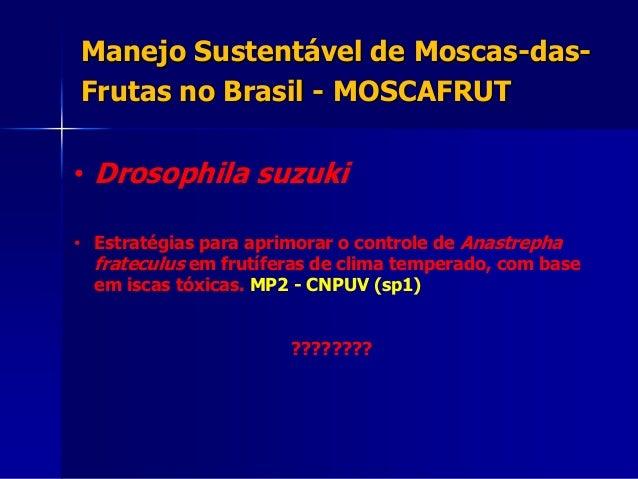 • Drosophila suzuki • Estratégias para aprimorar o controle de Anastrepha frateculus em frutíferas de clima temperado, com...