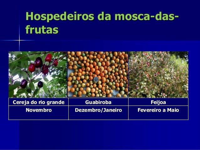 Dinâmica populacional da mosca- das-frutas em áreas de mata e pomar 0 10 20 150 moscas/frasco/dia 0 8 16 24 temperatura (o...