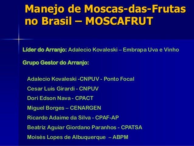 Manejo de Moscas-das-Frutas no Brasil – MOSCAFRUT Líder do Arranjo: Adalecio Kovaleski – Embrapa Uva e Vinho Grupo Gestor ...