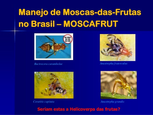 Manejo de Moscas-das-Frutas no Brasil – MOSCAFRUT Anastrepha fraterculus Ceratitis capitata Bactrocera carambolae Seriam e...