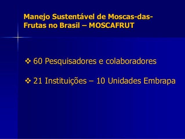Manejo Sustentável de Moscas-das- Frutas no Brasil – MOSCAFRUT  60 Pesquisadores e colaboradores  21 Instituições – 10 U...