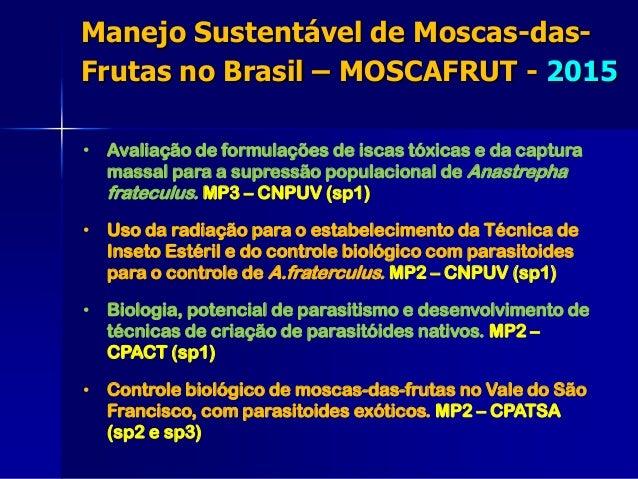 • Avaliação de formulações de iscas tóxicas e da captura massal para a supressão populacional de Anastrepha frateculus. MP...