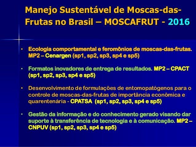 • Ecologia comportamental e feromônios de moscas-das-frutas. MP2 – Cenargen (sp1, sp2, sp3, sp4 e sp5) • Formatos inovador...