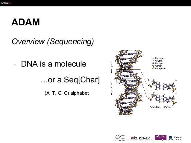 ADAM  Overview (Sequencing)  - DNA is a molecule  …or a Seq[Char]  (A, T, G, C) alphabet