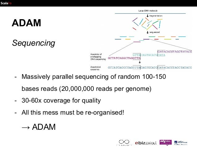 ADAM  Sequencing  - Massively parallel sequencing of random 100-150  bases reads (20,000,000 reads per genome)  - 30-60x c...