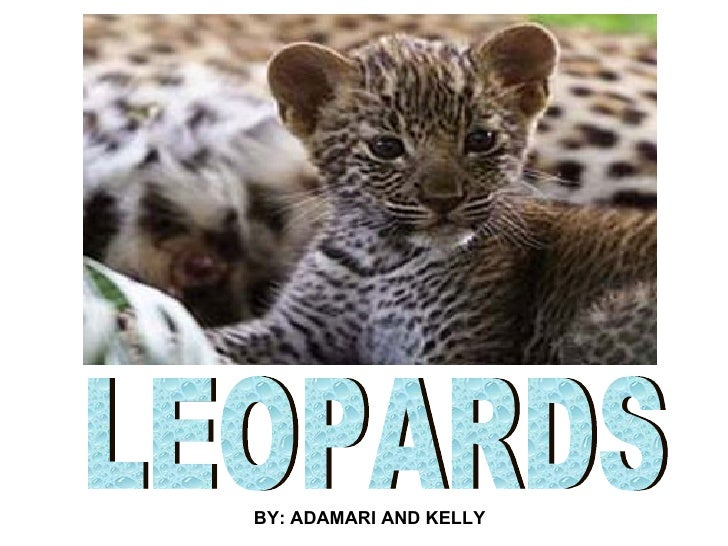 LEOPARDS BY: ADAMARI AND KELLY
