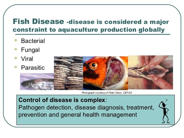 Development of diagnostic tools and vaccines for aquatic animals  Development of ...