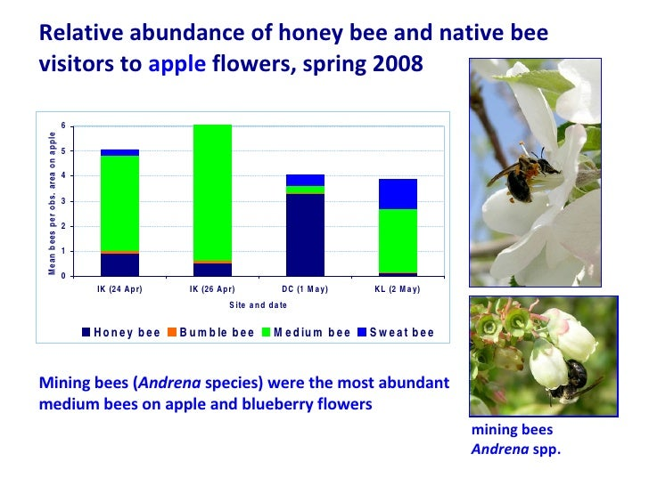 Relative abundance of honey bee and native bee visitors to  apple  flowers, spring 2008 Mining bees ( Andrena  species) we...