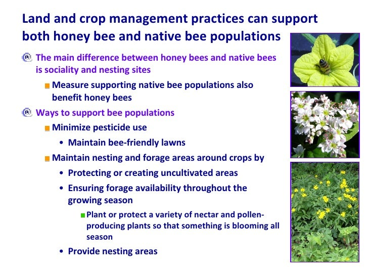 Land and crop management practices can support both honey bee and native bee populations <ul><li>The main difference betwe...