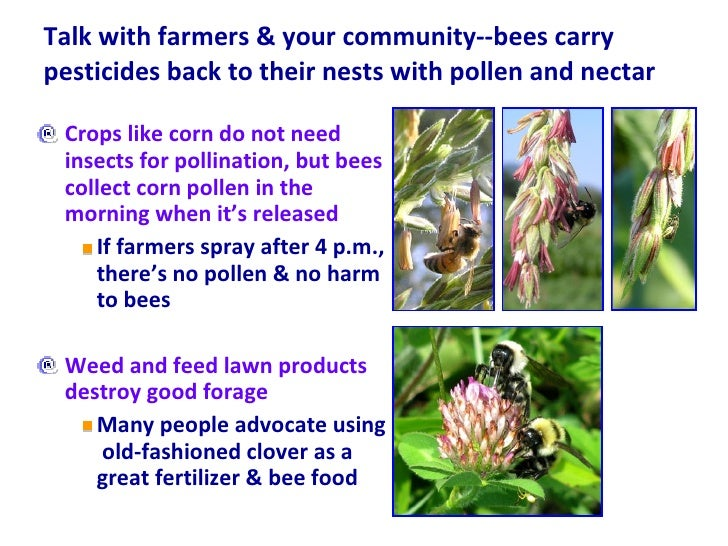 Talk with farmers & your community--bees carry pesticides back to their nests with pollen and nectar  <ul><li>Crops like c...