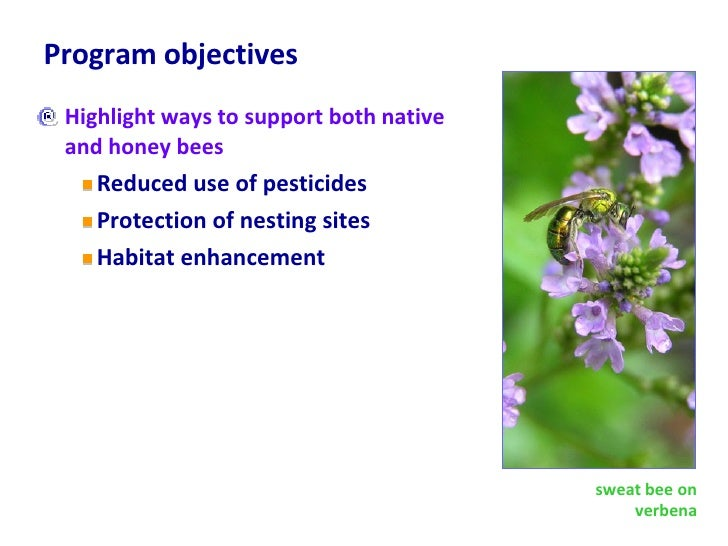 Program objectives <ul><li>Highlight ways to support both native and honey bees </li></ul><ul><ul><li>Reduced use of pesti...