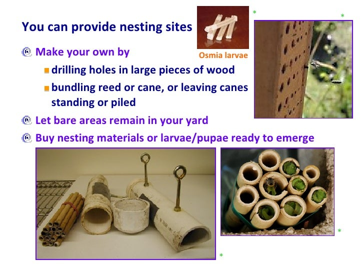 You can provide nesting sites  <ul><li>Make your own by  </li></ul><ul><ul><li>drilling holes in large pieces of wood  </l...