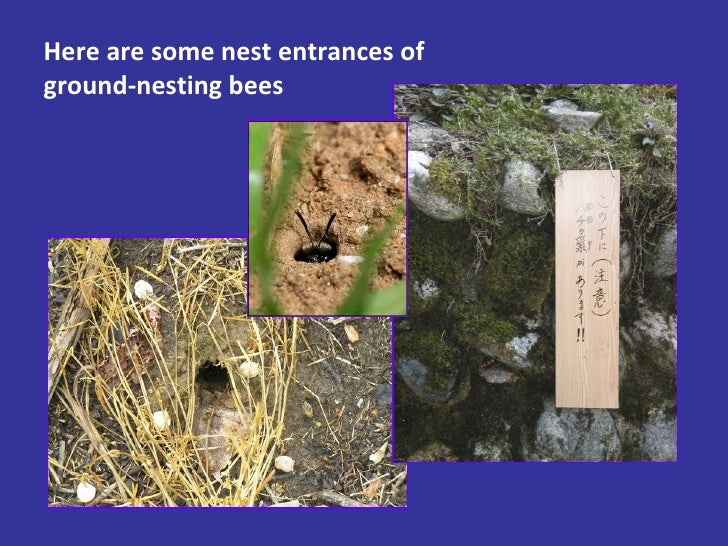 Here are some nest entrances of ground-nesting bees