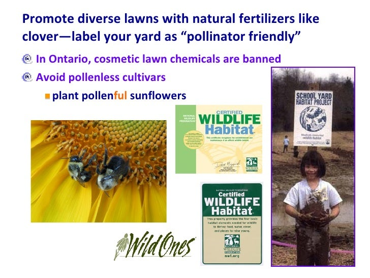 """Promote diverse lawns with natural fertilizers like clover—label your yard as """"pollinator friendly""""  <ul><li>In Ontario, c..."""