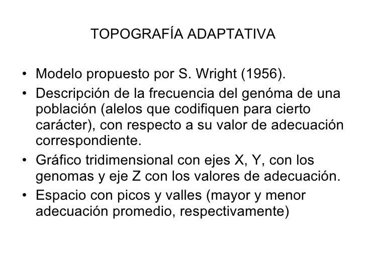 TOPOGRAFÍA ADAPTATIVA <ul><li>Modelo propuesto por S. Wright (1956). </li></ul><ul><li>Descripción de la frecuencia del ge...