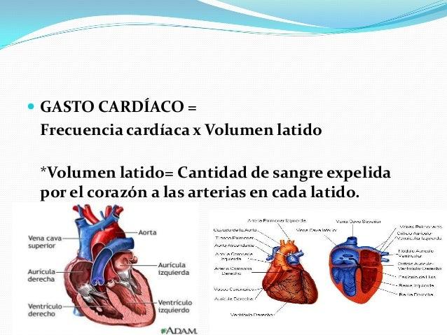 Adaptaciones cardiopulmonares al ejercicio Slide 2