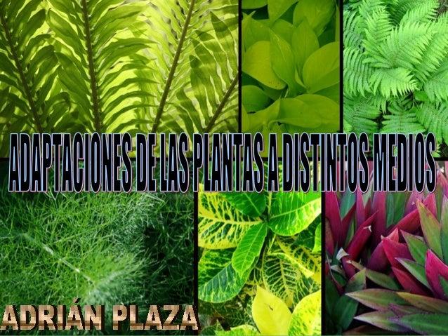 Adaptaciones de las plantas adri n plaza for Para que se utilizan las plantas ornamentales