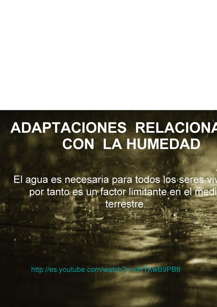 ADAPTACIONES  RELACIONADAS CON  LA HUMEDAD El agua es necesaria para todos los seres vivos y por tanto es un factor limita...