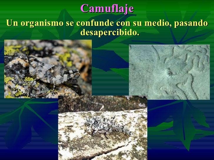 Adaptaciones seres vivos - Informacion sobre los cactus ...