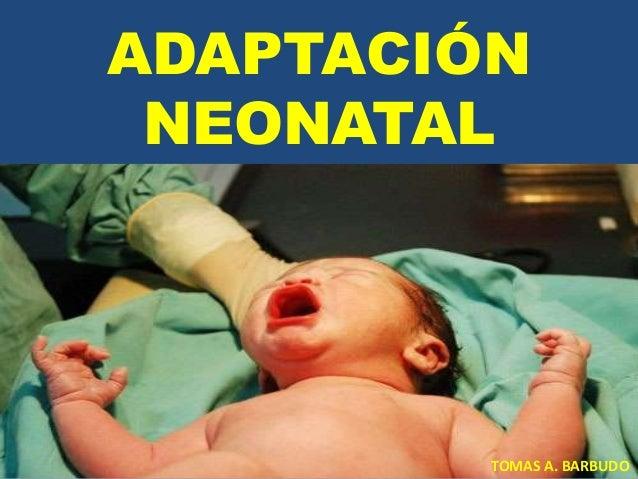 ADAPTACIÓN NEONATAL  TOMAS A. BARBUDO