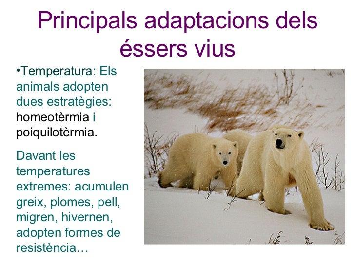 Principals adaptacions dels éssers vius <ul><li>Temperatura : Els animals adopten dues estratègies:  homeotèrmia  i  poiqu...
