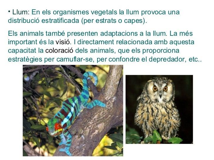 <ul><li>Llum:  En els organismes vegetals la llum provoca una  distribució estratificada (per estrats o capes). </li></ul>...