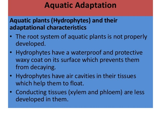 adaptive features of animals in aquatic Penguins - adaptations for an aquatic environmentdiscover animal, environmental, and zoological career facts as you explore in-depth topic coverage via seaworld, busch gardens, and discovery cove's on-line information books.