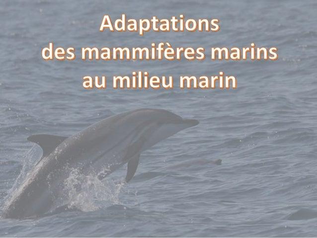 Ancêtre des mammifères marins 50 millions d'années  vie aquatique (moins de prédateurs et plus de proies) Mésonix = ancêt...