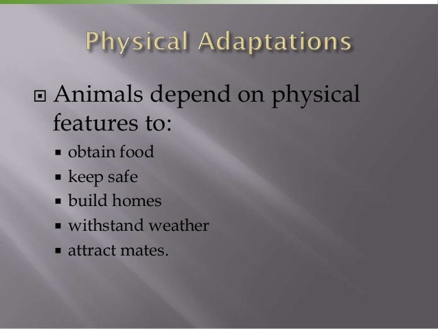    Animals depend on physical    features to:       obtain food       keep safe       build homes       withstand wea...
