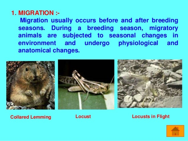 animal adaptation - photo #24