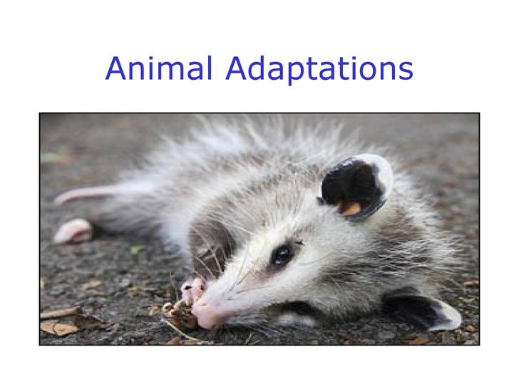 animal adaptation - photo #30