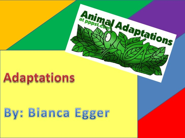"Type of "" Adaptation"":Structural AdaptationWhat the ""Adaptation"" is:A birds beakWhat the ""Adaptation"" does to survive: The..."