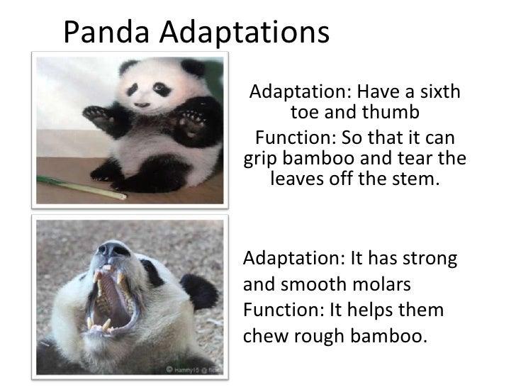 Adaptation project (6 7)