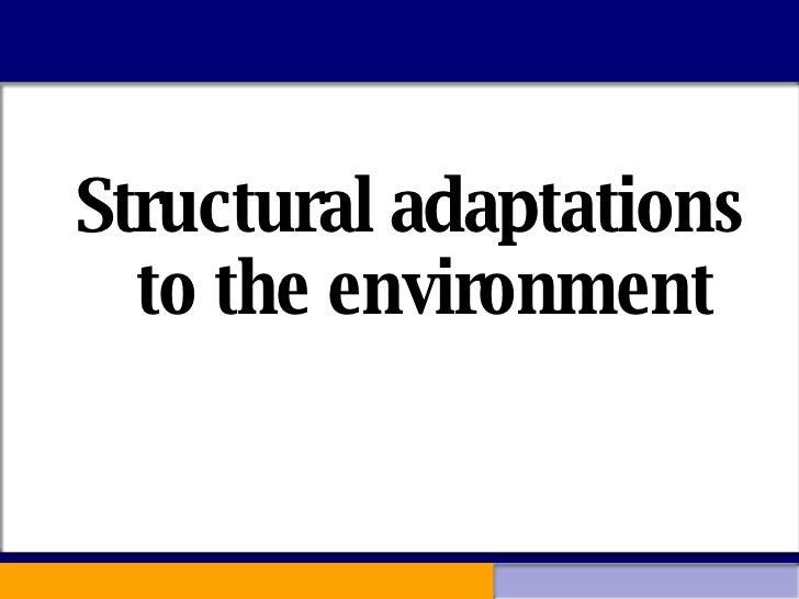 <ul><li>Structural adaptations to the environment </li></ul>