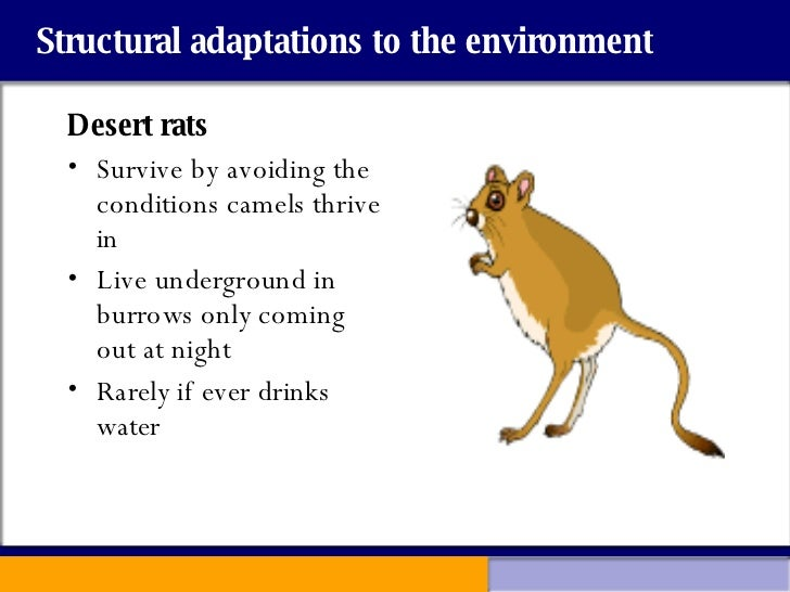 the environmental adaptations of the kangaroo The kangaroo is a large animal with some adult males reaching over 6 feet tall and weighing 200 pounds, but dingos can still pose a threat, and kangaroos, amazingly.