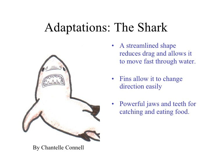 Adaptations1