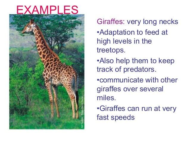 Adaptations science 3º